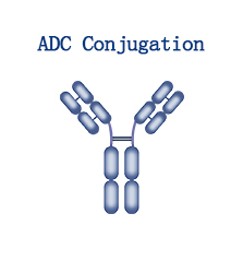 ADC Conjugation